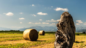 Hay bale in the fields of italy stock photos