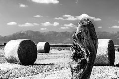Hay bale in the fields of italy stock images