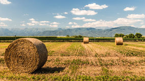 Hay bale in the fields of italy royalty free stock image