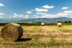 Hay bale in the fields of italy stock image