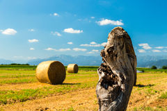 Hay bale in the fields of italy stock photography
