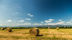 Hay bale in the fields of italy royalty free stock photos