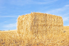 Hay bale in the fields Royalty Free Stock Image