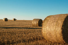 Hay bale in the foreground of rural field Stock Image
