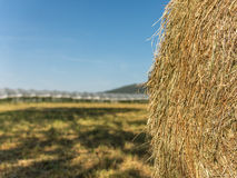Hay bale in front of greenhouse. Farming with hay bale in front of greenhouse Stock Photo