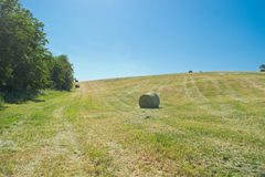 Hay bale in a green field Royalty Free Stock Photos