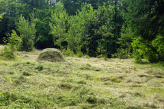 Hay bale and green forest Royalty Free Stock Photo