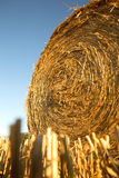 Hay bale. On a harvested field in Germany Stock Photography