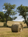 Hay bale on harvested field. A hay bale on a harvested field with trees Royalty Free Stock Images
