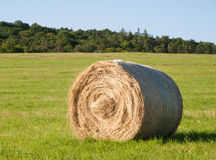Hay bale harvested on summer lying on meadow Royalty Free Stock Photo