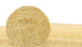 Hay bale isolated close up background. Royalty Free Stock Image