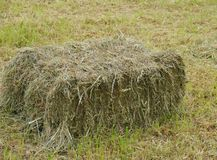 Hay bale in a meadow in spring Stock Photo