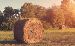 Hay bale on meadow. A sunny day Stock Photo