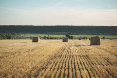 Free Hay Bale On Field With Wheat Straw And Sky In The Farm Land At S Stock Photography - 120974252