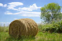 Hay bale out in the field Stock Photo