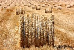 Hay bale outdoor. Hay bale on stubble field outdoor Royalty Free Stock Images