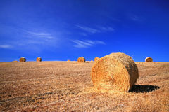 Hay bale in paddock Stock Images