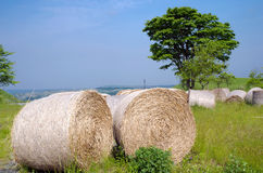 Hay bale roll Stock Images