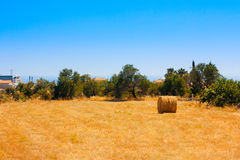 Hay Bale Roll in Field. In summer day royalty free stock photos