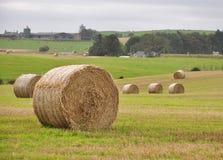 Hay Bale Stock Image