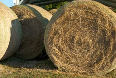 Hay bale rolls closeup Stock Photography