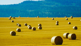 Hay bale rolls Stock Image