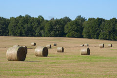 Hay bale rolls in a field. On a sunny morning Royalty Free Stock Photo