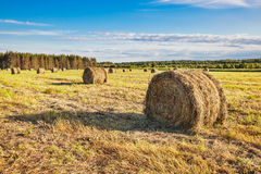 Hay bale rolls in a field Stock Photos