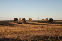 Hay bale rolls on a field Royalty Free Stock Images