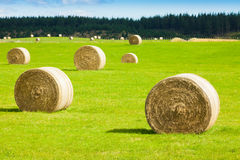 Hay bale rolls in a green field Stock Photos