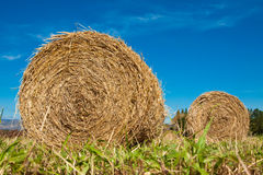 Hay bale rolls in a green field Royalty Free Stock Image