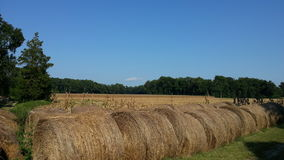 Hay bale rolls Royalty Free Stock Photos