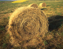 Hay Bale Round. A round bale of hay in a field in Montana Royalty Free Stock Images