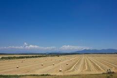 Hay Bale Scenery. Summer blue sky Royalty Free Stock Image