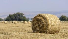 Hay Bale Scenery. Straw bales on farmland Royalty Free Stock Photography