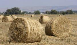 Hay Bale Scenery. Straw bales on farmland Stock Image