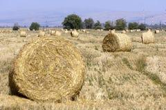 Hay Bale Scenery. Straw bales on farmland Stock Photo