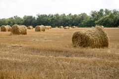 Hay bale or sheaf in a cold day Royalty Free Stock Photos