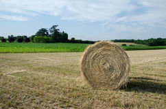 Hay bale. Single hay bale in a field Royalty Free Stock Image
