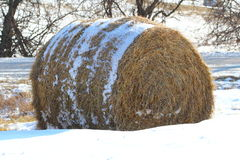 Hay bale in the snow Royalty Free Stock Image