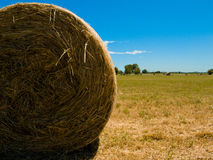 Hay bale in a sunny day. Hay bale in sunny day Stock Photo