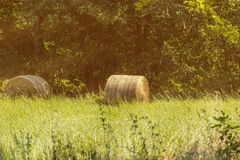 Hay bale on a sunny field Stock Photography