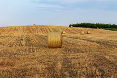 Hay bale at sunset Royalty Free Stock Photo
