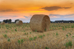 Hay bale at sunset Royalty Free Stock Image