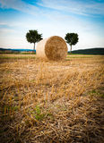 Hay Bale and Trees Royalty Free Stock Images