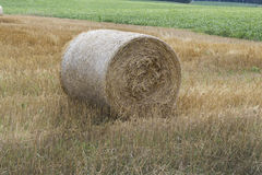 Hay Bale. In a Wheat Field Stock Photography