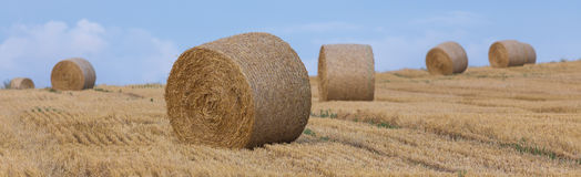 Hay bale wheat field Royalty Free Stock Image