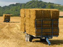 Hay Baler Waiting. Harvested hay waiting to be collected Royalty Free Stock Photo