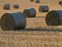 Free Hay Bales Royalty Free Stock Photo - 4135
