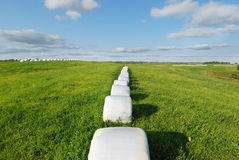 Hay bales. Wrapped in plastic sheet Royalty Free Stock Images